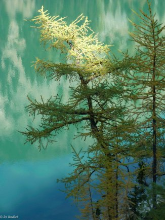 Lake Anges Larch (1 of 1)